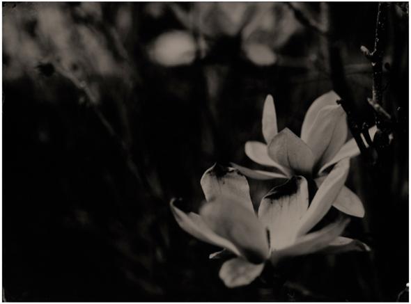 flower1_LR