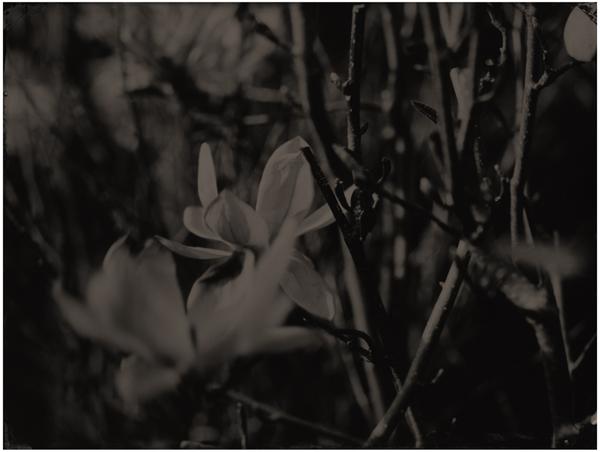 flower2_LR