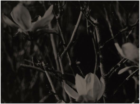 flower3_LR