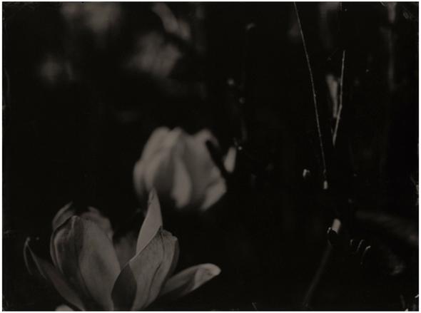 flower4_LR